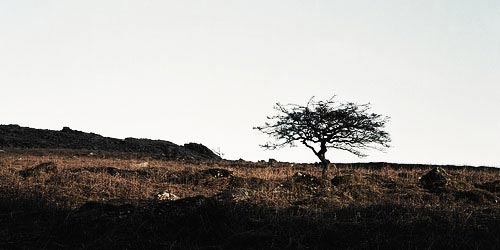 barren-tree